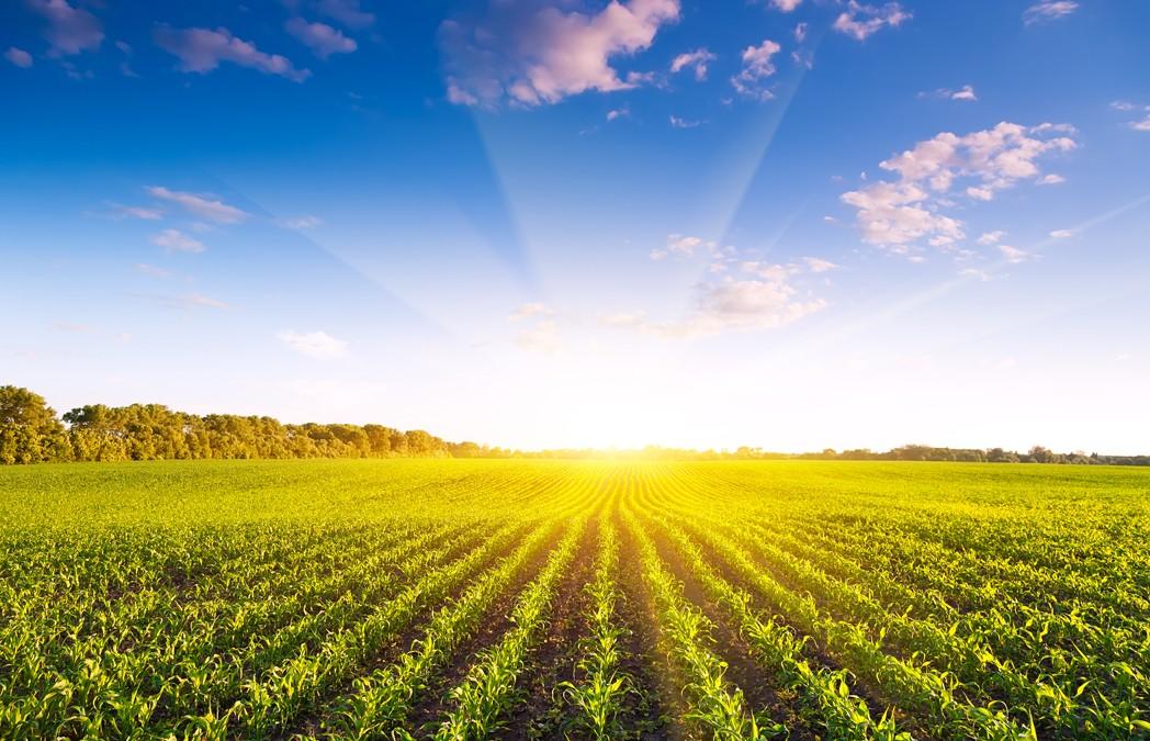 Българското земеделие получи над 3,3 млрд. лв. през 2015г.