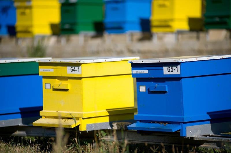 Обявено е трето класиране по мярка Д от Пчеларската програма