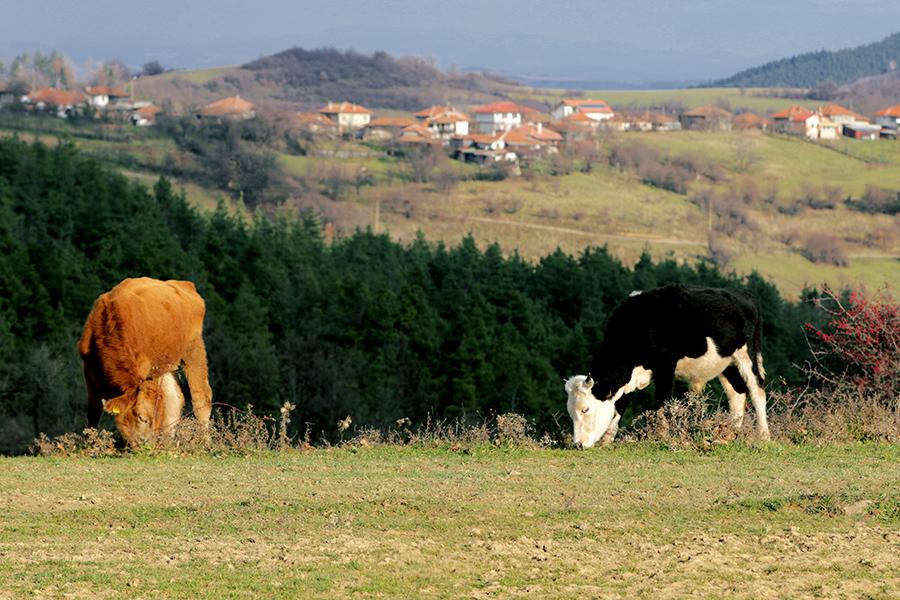 """Одобрени са 1 253 проекта по подмярка 6.3 """"Стартова помощ за развитието на малки стопанства"""""""